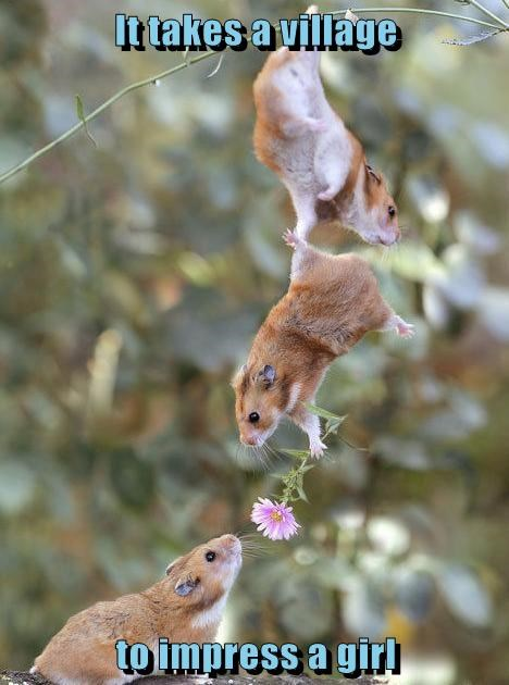 impress,girls,flowers,funny,mouse