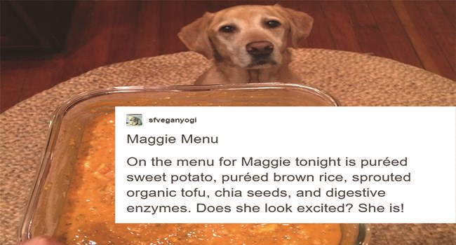 tumblr post about whether dog should be vegan