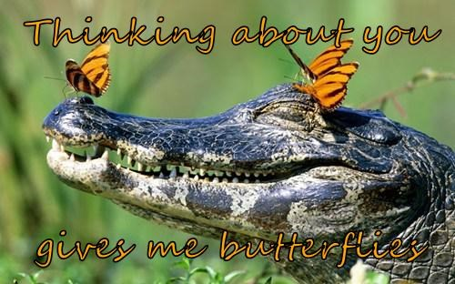 alligator,butterflies,sweet
