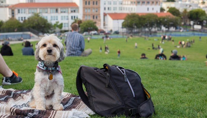 cities certification pets pet friendly - 7644677