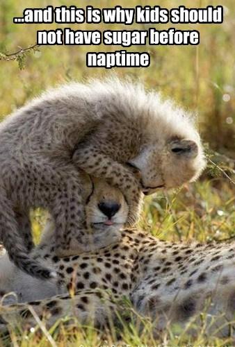 cheetah kids sugar funny - 7644937216