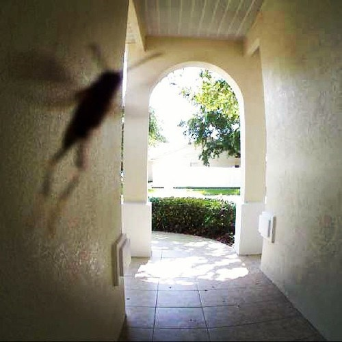 photobomb wasp funny