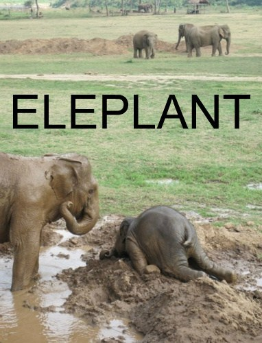 elephant,mud,face plant,funny