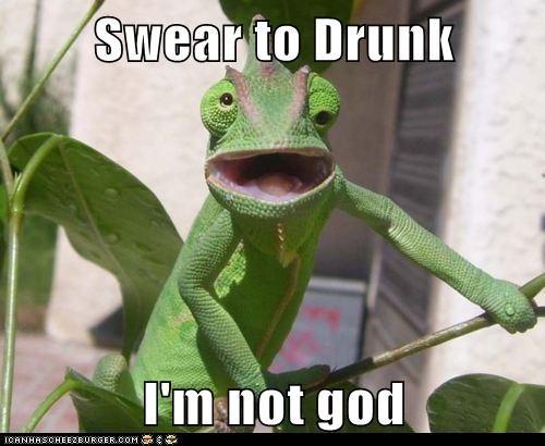 alcohol drunk chameleon funny - 7645302272