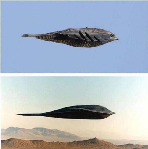 birds b-2 bomber totally looks like funny
