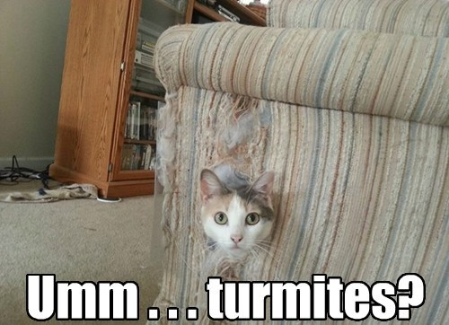 Umm . . . turmites?