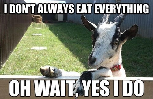 goat the most interesting man in the world food eating funny