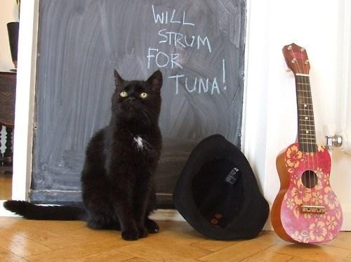 guitar tuna panhandler funny - 7645675264
