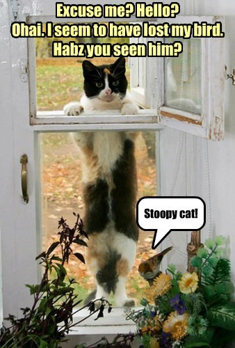 Excuse me? Hello? Ohai. I seem to have lost my bird. Habz you seen him? Stoopy cat!