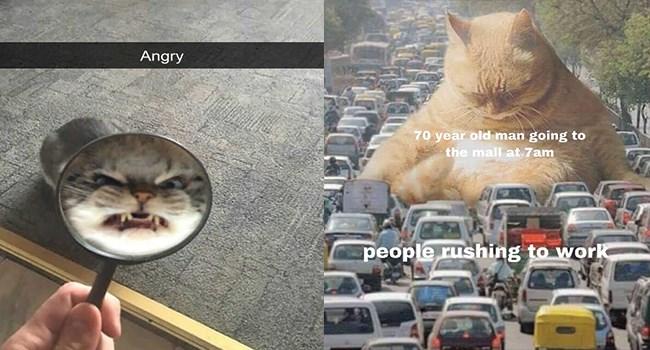 its-caturday Caturday funny cat memes lol funny cats Cats funny cat memes - 7645957