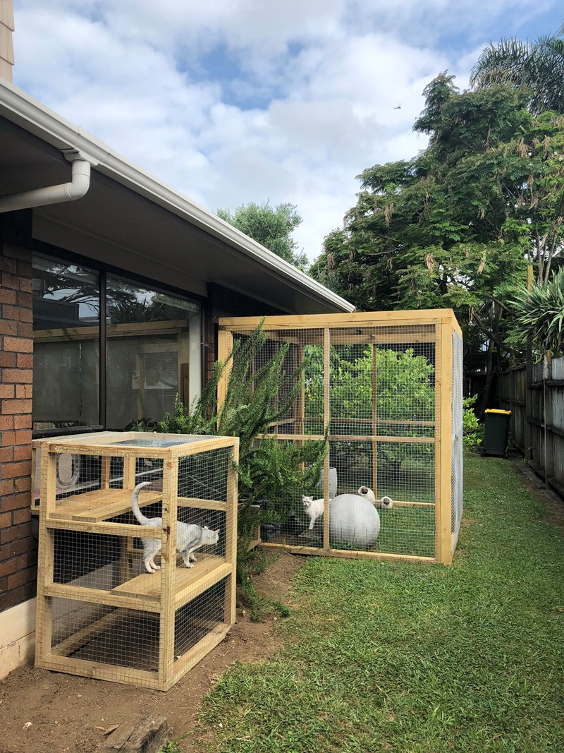 outdoors built creative new zealand outdoor enclosure Cats beautiful - 7646213