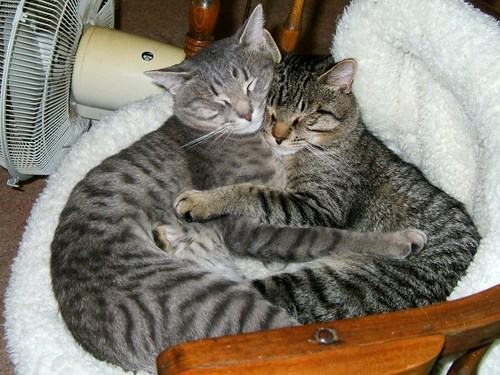 cute cuddling sleep Cats - 7646265088