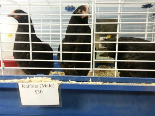 roosters,chicken,carrots,pet store,rabbits