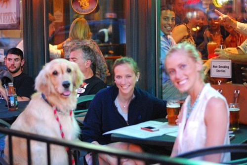 photobomb,dogs,restaurant,funny