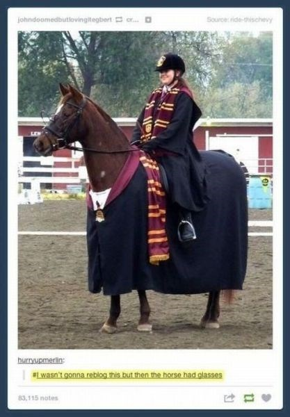 cosplay Harry Potter nerdgasm funny horse - 7646448128