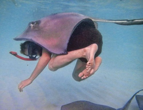scuba photography ocean sting ray funny - 7646460672