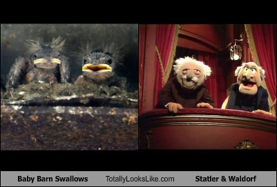 Babies,Statler and Waldorf,totally looks like,funny,barn swallows