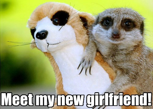 forever alone,stuffed animal,meerkat,girlfriend,funny