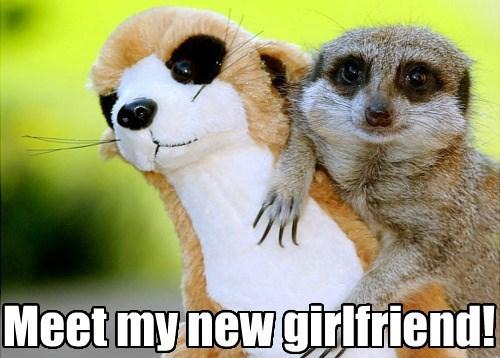 forever alone stuffed animal meerkat girlfriend funny - 7646487808