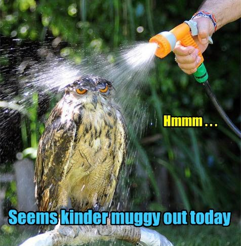 Seems kinder muggy out today Hmmm . . .