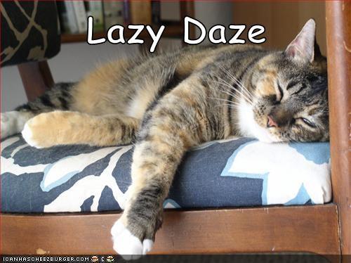 lazy daze funny - 7647040768
