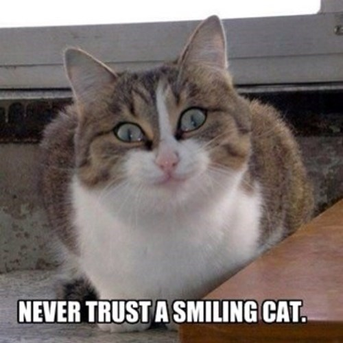 cat smiling funny - 7647262464