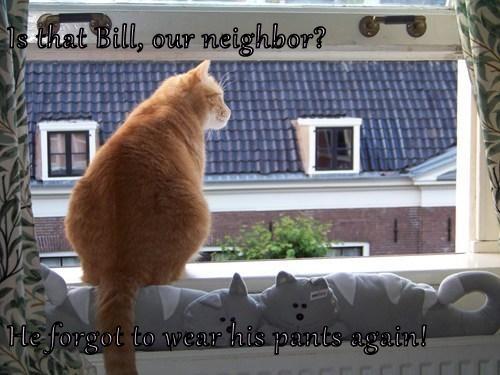 Cheezburger Image 7647734784