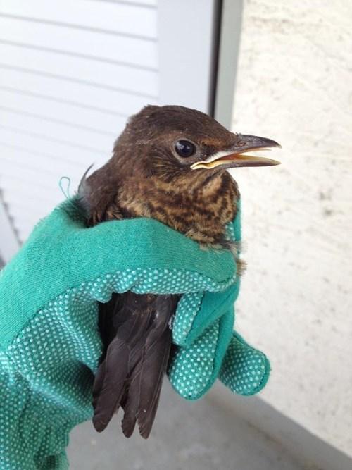 baby bird rescued