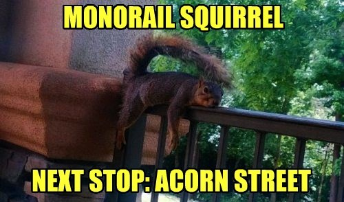 squirrel,acorn,monorail,funny
