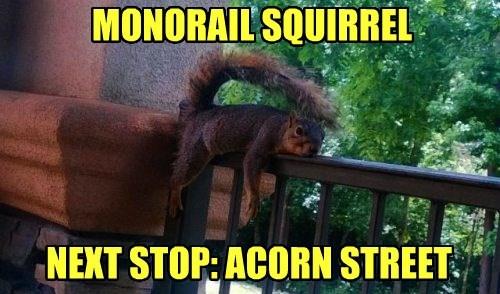 squirrel acorn monorail funny - 7648357888