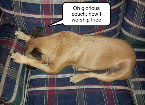 worship,couch,funny