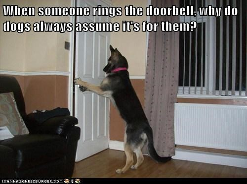 doorbell this is dog funny - 7648879872
