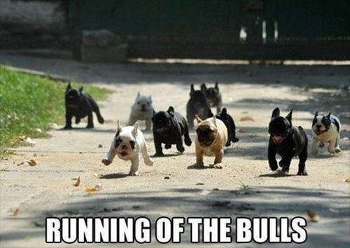 running of the bulls cute bulldogs - 7648971264