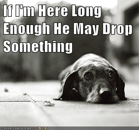 food dog logic funny - 7648992512