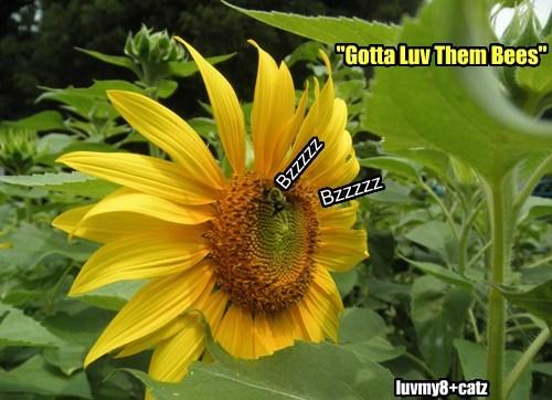 """Bzzzzz Bzzzzz luvmy8+catz """"Gotta Luv Them Bees"""""""