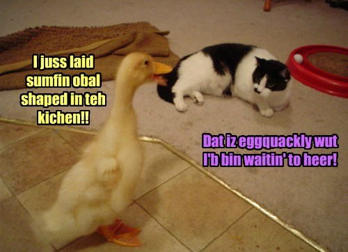 ducks kitchen Cats omelet funny - 7649132032