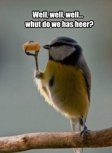 cheese bird funny - 7649134336