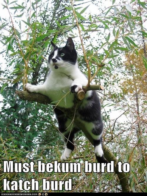 birds hunter funny - 7649180672