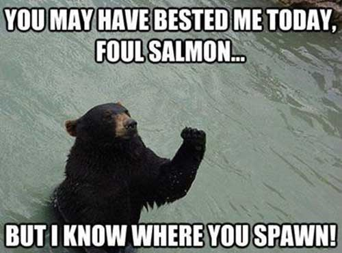 bears,salmon,animals