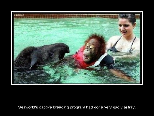 ape,sea world,wtf,funny,weird