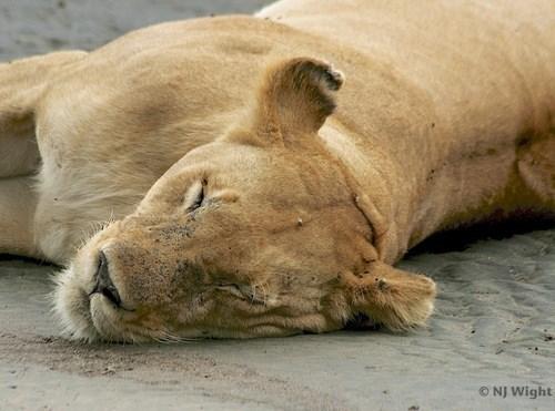 cute sleep Cat Nap - 7649305088