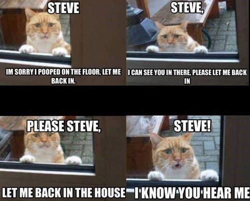 inside,please,in trouble,funny,steve