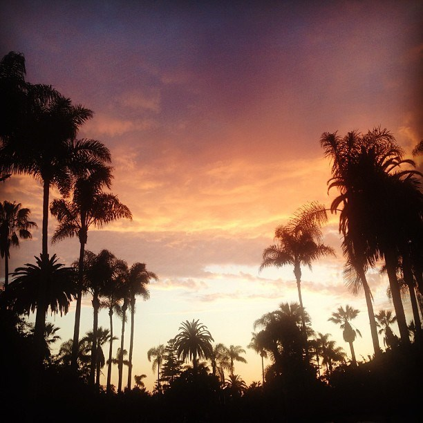 tumblr,instagram,filters,landscapes,palm trees