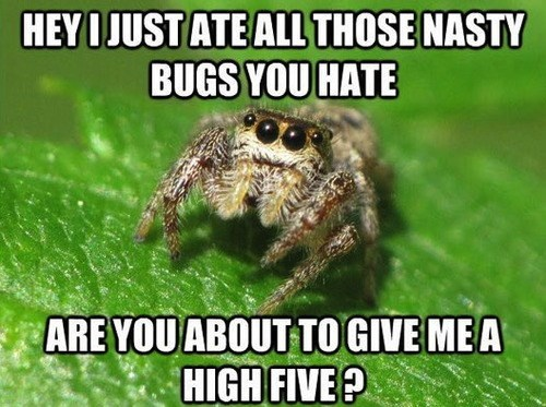 spiders,high fives,nope