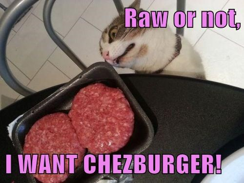 Cheezburger Image 7649591808