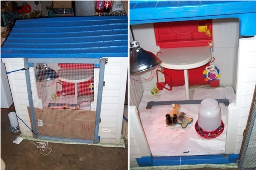 kids playhouse,chickens,chicken wire,recycling,duct tape,funny