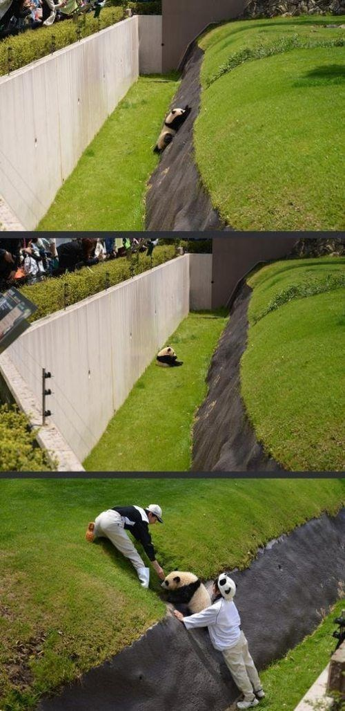 random act of kindness panda zoo cute restoring faith in humanity week funny - 7649859328