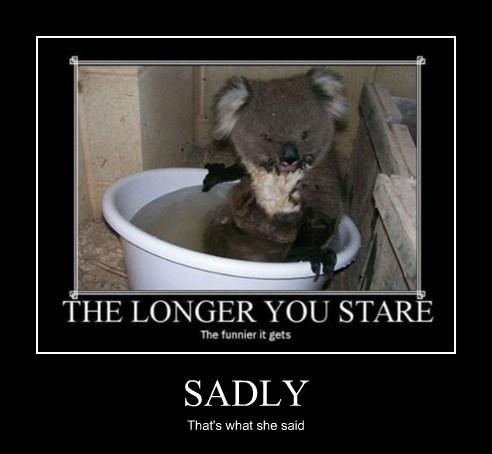 thats what she said,koala,dirty,funny