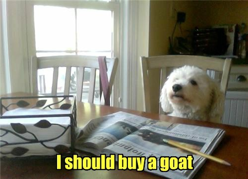i should buy a boat morning funny newspaper - 7650371840