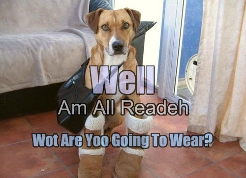 Dont Be Silly Hoomin! We Can't Both Dress Like Me Well Am All Readeh Wot Are Yoo Going To Wear?